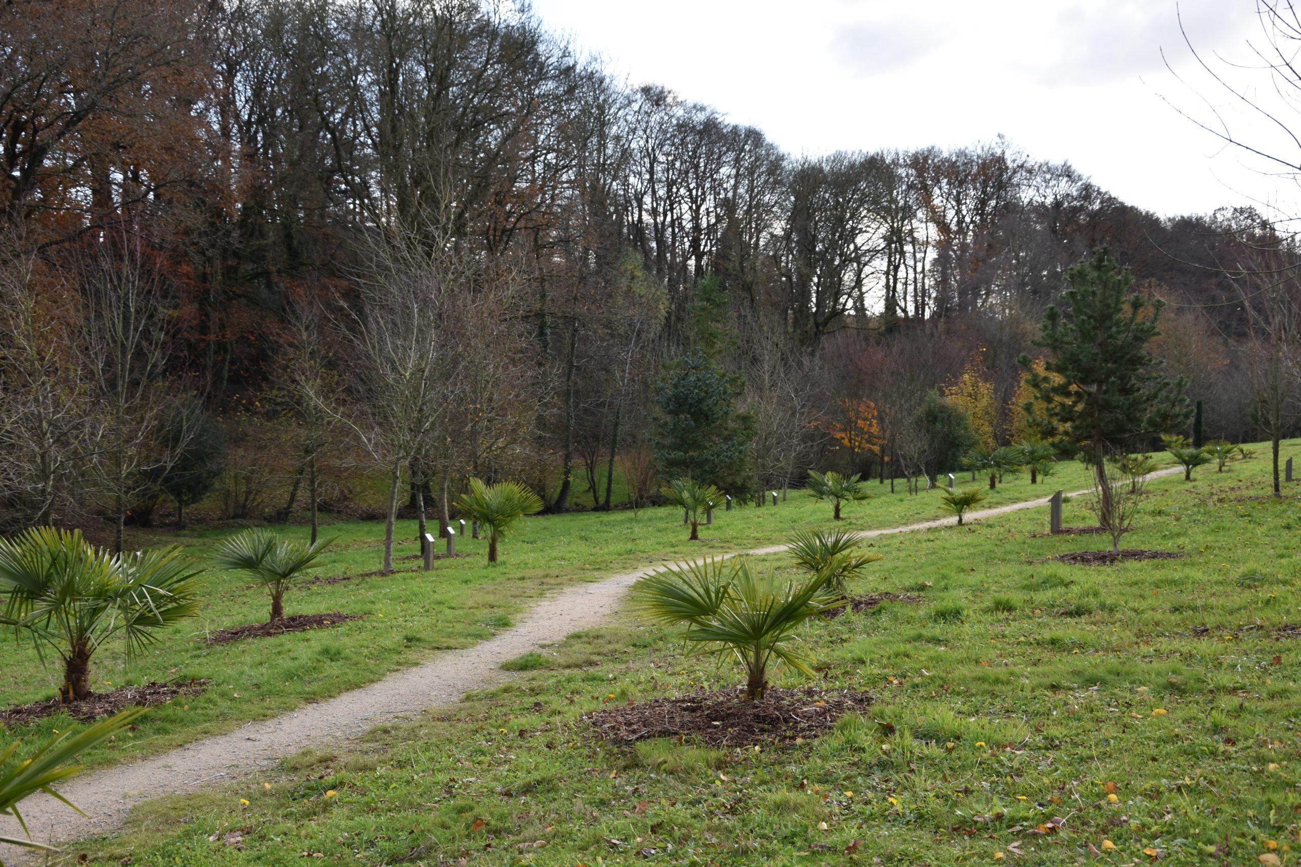 Arboretum près de l'étang du bourg de Pluméliau