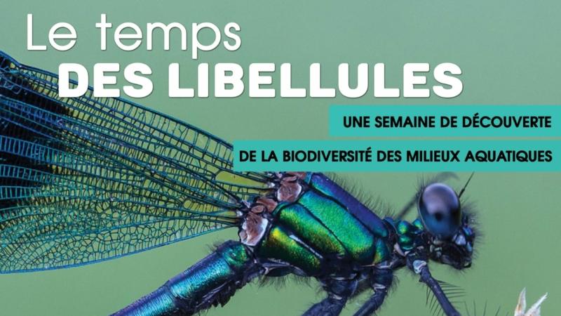Une semaine de découverte de la biodiversité des milieux aquatiques – le temps des libellules