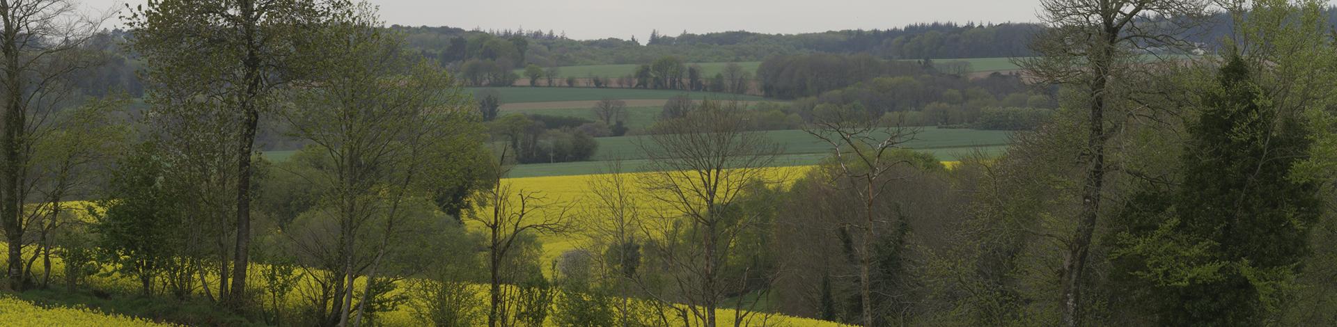 Champs de Colza au printemps